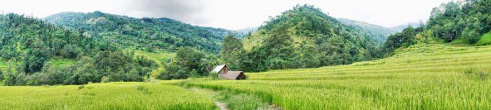 Hier wächst Nepals Hauptnahrungsmittel
